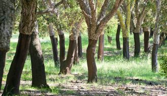 Warm Trees Canberra 2016