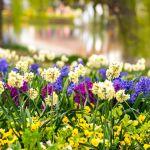 Melbourne international Flower & Garden Show 2017