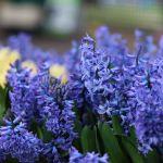 Melbourne International Flower and Garden Show 2019
