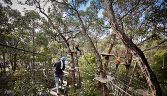 Best Tree Surfing Adventure in Melbourne