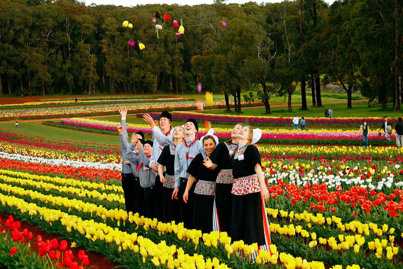 Tulip festival melbourne 2015