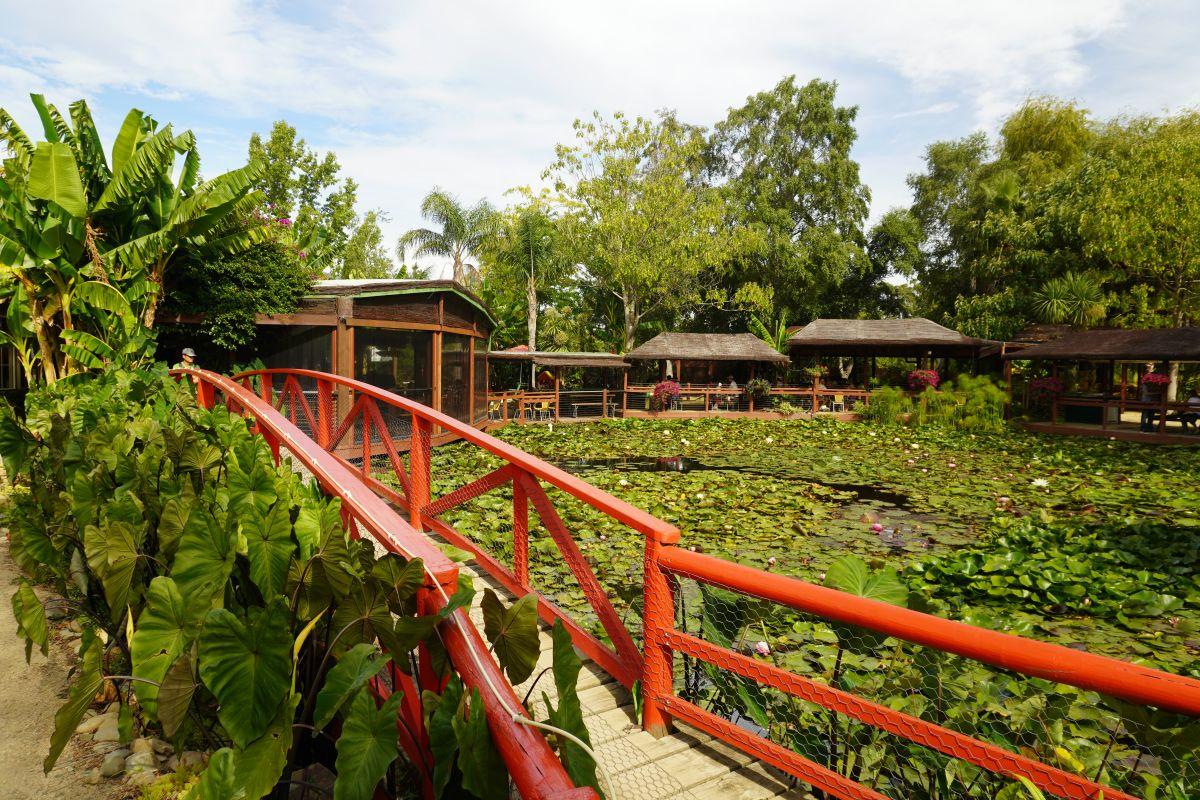 blue lotus garden 122
