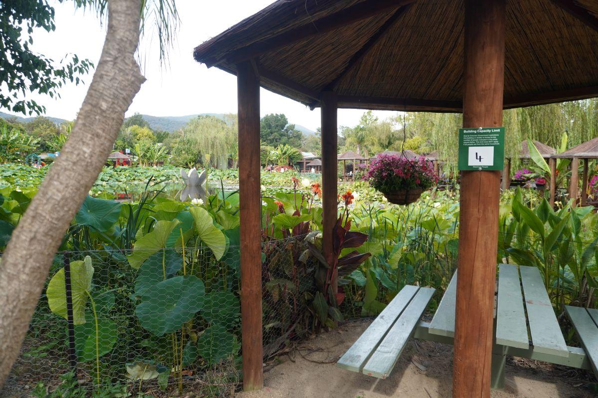 blue lotus garden 128