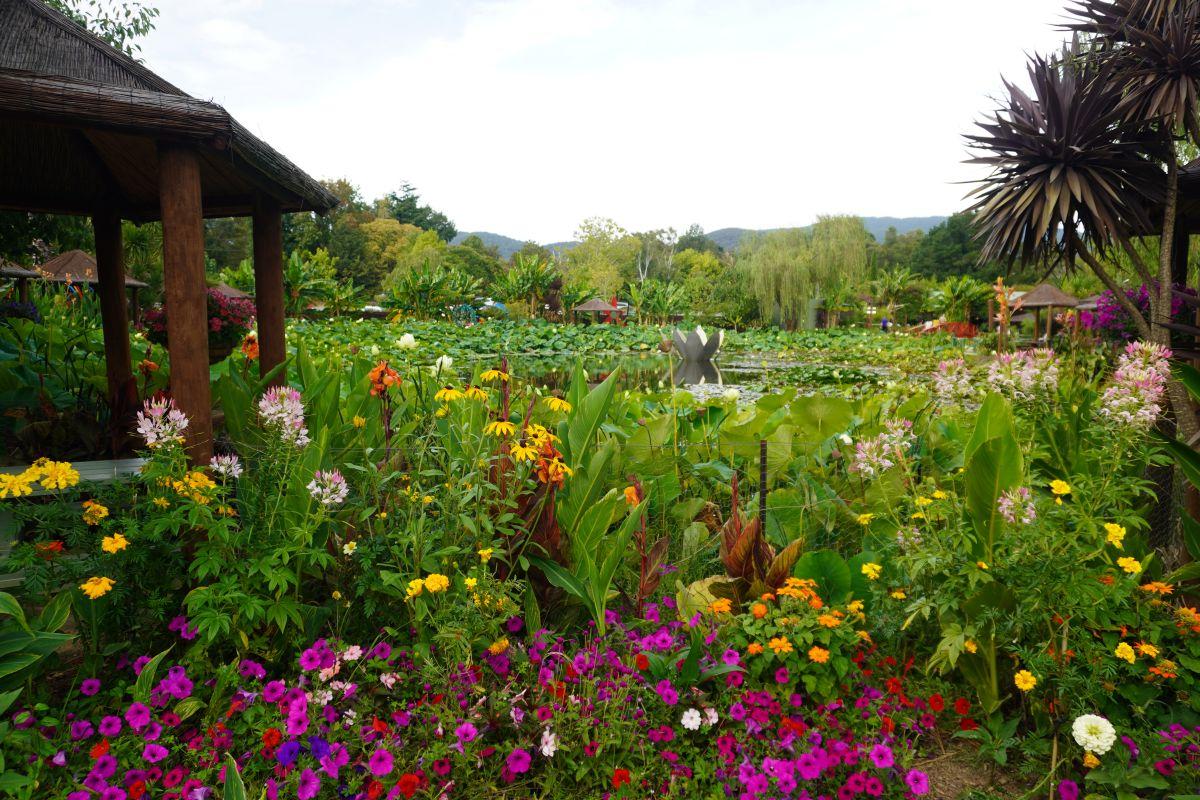 blue lotus garden 129