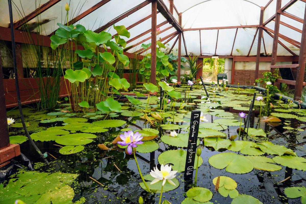 blue lotus garden 146