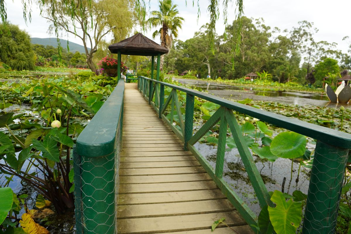 blue lotus garden 154