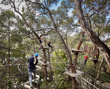 enchanted adventure tree surfing melbourne