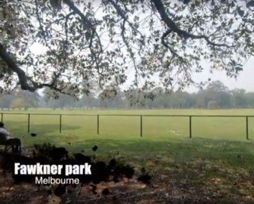 fawkner park experience