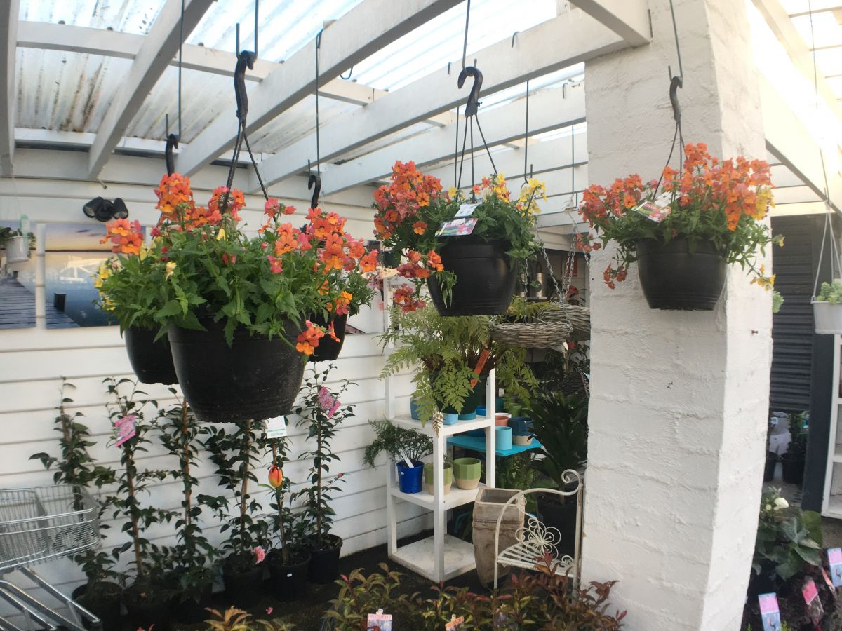 hanging pots and plants in the nursery