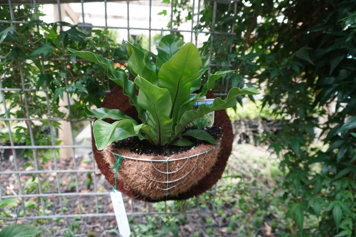 roraima nursery lara6 1