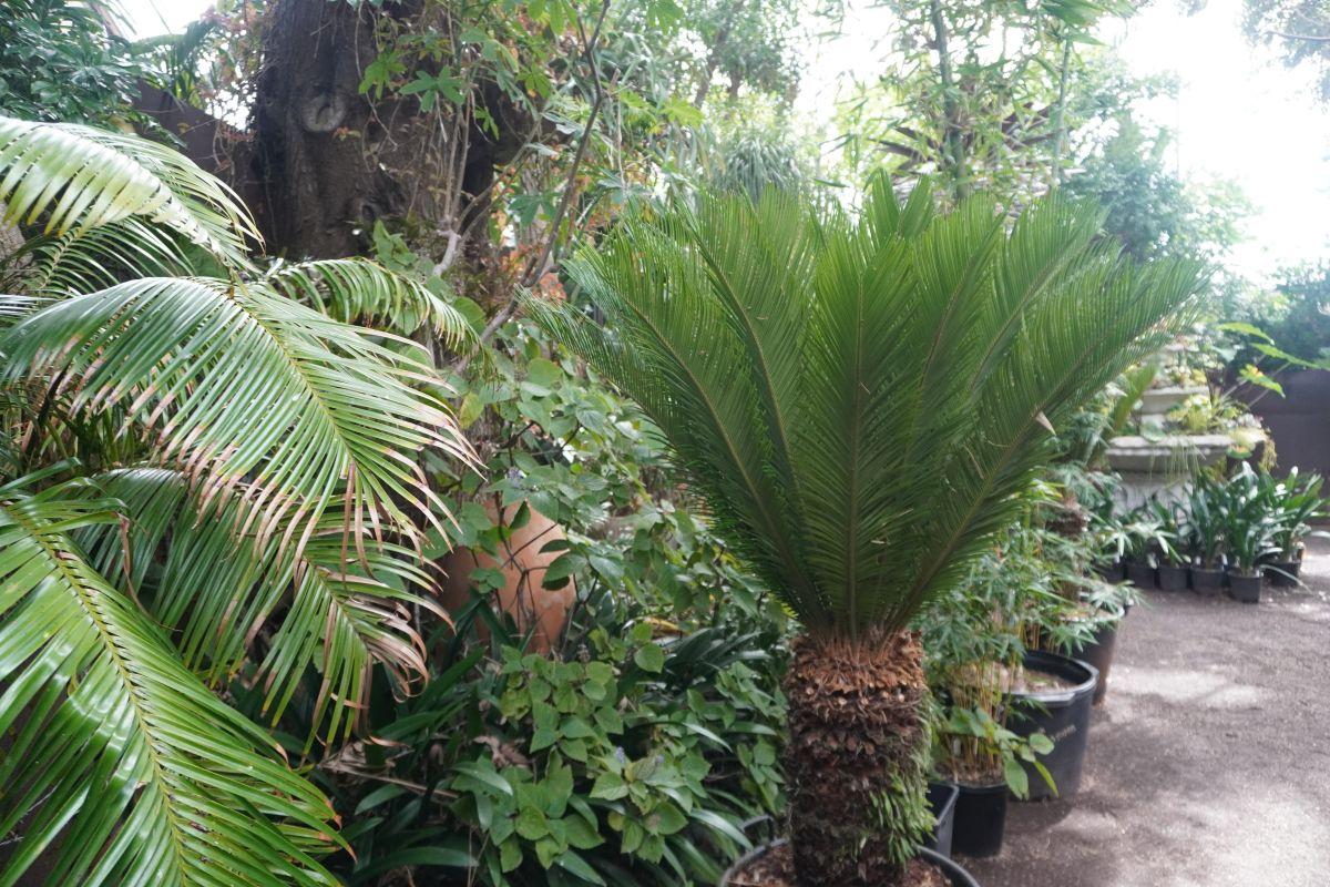 roraima nursery lara8 1