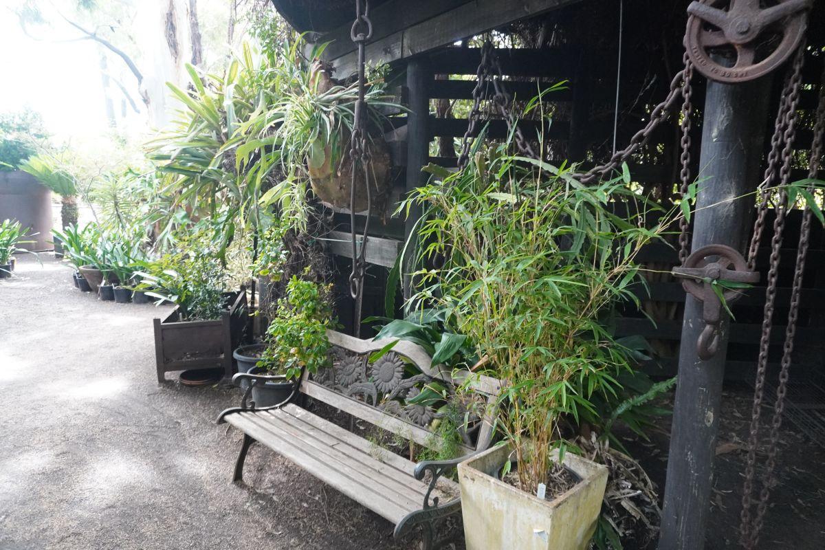 roraima nursery lara9 1